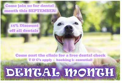 Dental Month Special