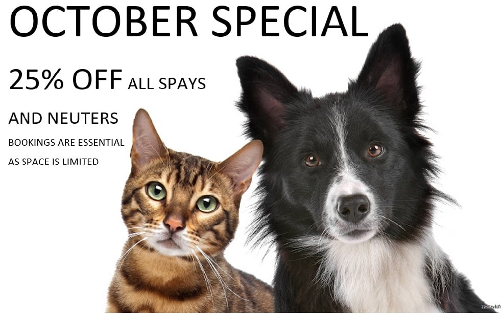 Current Special: 25% off all spays and neuters this month
